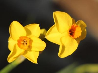 Les fleurs font leur retour